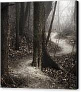 The Foggy Path Canvas Print by Scott Norris