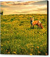 The Fox And The Cow Canvas Print