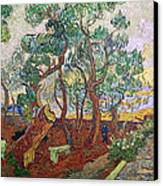 The Garden Of St Pauls Hospital At St. Remy Canvas Print by Vincent Van Gogh