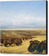The Gathering Of The Herd Canvas Print by William Jacob Hays