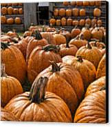 The Great Pumpkin Farm Canvas Print by Peter Chilelli