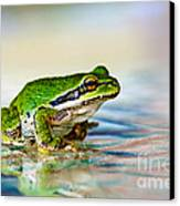 The Green Frog Canvas Print by Robert Bales
