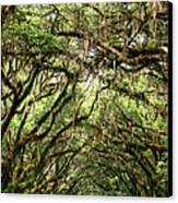 The Green Mile Savannah Ga Canvas Print