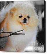 The Groomer Canvas Print