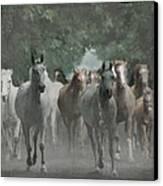 The Horsechestnut Tree Avenue Canvas Print