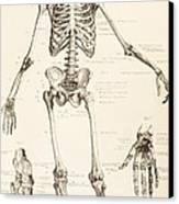 The Human Skeleton Canvas Print