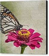 The Joy Of A Butterfly Canvas Print