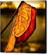 The Leaf Across The River Canvas Print by Bob Orsillo