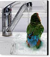 The Lovebird's Shower Canvas Print by Terri Waters