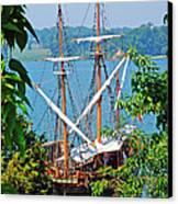 The Maryland Dove Canvas Print by Thomas R Fletcher