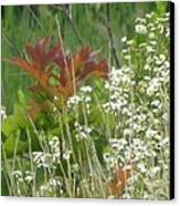 The Mighty Tiny Oak Amidst White Flowers Canvas Print