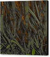 The Mystery Of Surface Roots Canvas Print