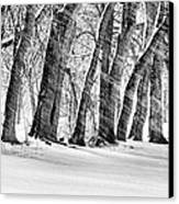 The Noreaster Bw Canvas Print