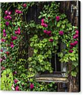 The Old Barn Window Canvas Print by Debra and Dave Vanderlaan