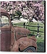 The Old Truck And The Crab Apple Canvas Print