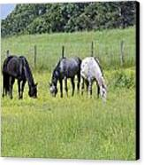 The Pasture Canvas Print