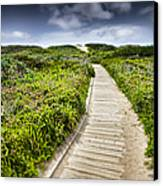 The Path Canvas Print by John Early