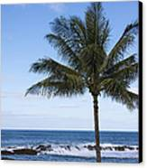 The Perfect Palm Tree - Sunset Beach Oahu Hawaii Canvas Print