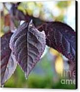 The Purple Leaf Canvas Print by Aqil Jannaty