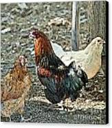 The Rooster And His Hens Canvas Print