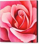 The Rose Canvas Print by Natasha Denger
