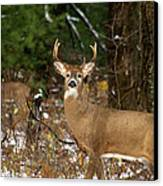 The Rutting Whitetail Buck Canvas Print by Thomas Young