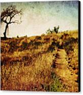 The Secret Pathway To Aspiration Canvas Print