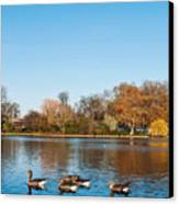 The Serpentine Ducks Canvas Print