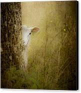 The Shy Lamb Canvas Print