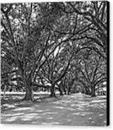 The Southern Way Bw Canvas Print