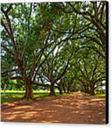 The Southern Way  Canvas Print