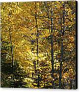 The Splendor Of Yellow   Canvas Print