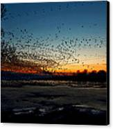 The Swarm Canvas Print by Matt Molloy
