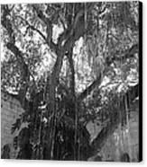 The Tree Vines Canvas Print