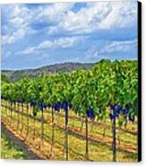 The Vineyard In Color Canvas Print by Kristina Deane