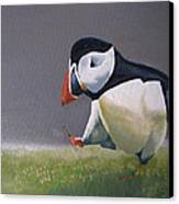 The Walking Puffin Canvas Print by Eric Burgess-Ray