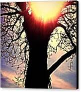 The Walnut Tree Canvas Print