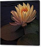 The Waterlily Canvas Print by Jill Balsam