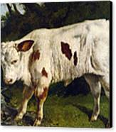 The White Calf Canvas Print by Gustave  Courbet