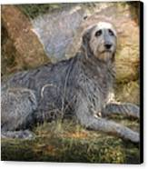 The Wolfhound  Canvas Print