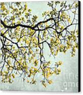 The Yellow Tree Canvas Print by Sharon Coty