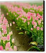 Think Pink Canvas Print by Nick  Boren