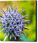 Thistle Canvas Print by Andrew Lalchan