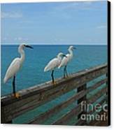 Three Amigos Canvas Print by Mel Steinhauer