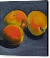 Three Apricots Canvas Print