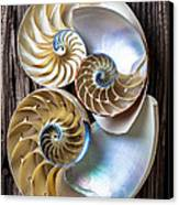 Three Chambered Nautilus Canvas Print by Garry Gay