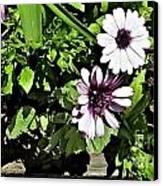 Three Flowers Canvas Print by Claudette Bujold-Poirier