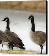 Three Geese Abstract Canvas Print by Dave Dilli