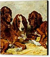 Three Irish Red Setters Canvas Print by John Emms
