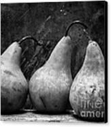 Three Pear Still Life Black And White Canvas Print by Edward Fielding
